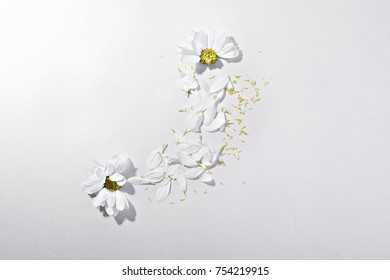 a pattern of petals and chamomile flowers