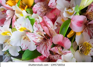 Pattern with pink, yellow, white flowers. Alstroemeria flowers. Background for greeting card, banner, blog. Alstomerias live flowers. View from above