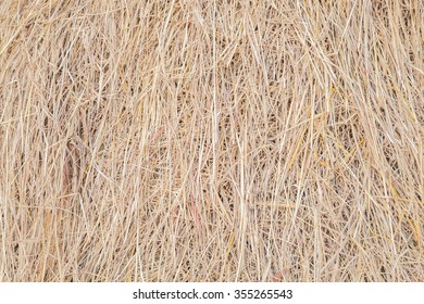 Pattern of rice straw in the farm