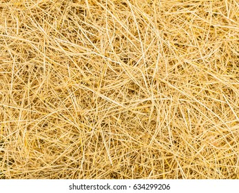 Pattern of rice straw. Top view of natural.  texture background for design with copy space for text or image.