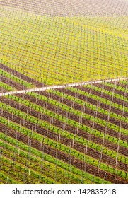 Pattern of rows of grape vines in vineyard in Castell Germany in spring as the first buds appear on the old vine as the leaders are tied to the wire framework