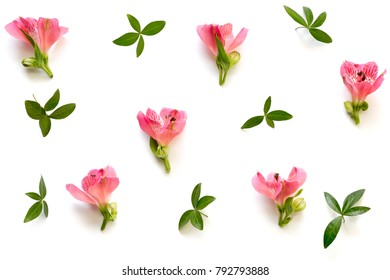 Pattern with soft red alstroemeria flowers and green leaves on white background. View from above.