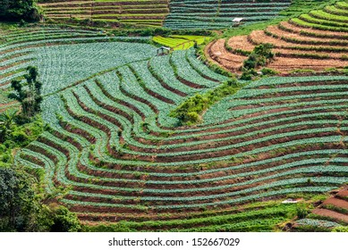 Pattern of terraced paddy