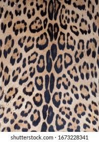 パターン、テクスチャ、背景。アマゾン川沿いのイキトス市ベレンバザール(ベレン市場)のジャガーの皮膚、熱帯雨林の入り口、アマゾニア、ロレト、ペルー、南アメリカ