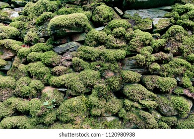 Pattern and texture background of old stone wall covered with clumps of green moss