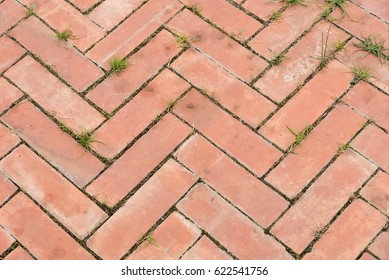 Pattern or texture of pavement in the park.