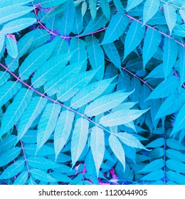 a pattern of turquoise tropical leaves. bright neon colors. minimal and surreal. style of the 80's