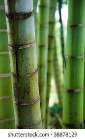 Pattern of vertical green bamboo stems.