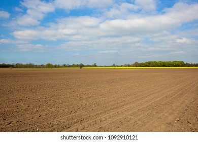 patterned plow soil with yellow flowering oilseed rape and woodland under a blue cloudy sky in Springtime