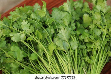 Patterns of coriander leaves.