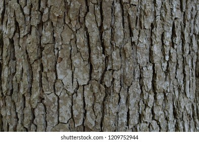 Patterns and design of the bark of a tree.