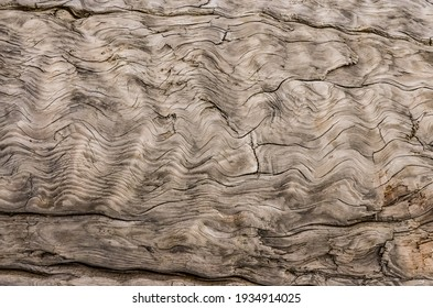 Patterns of layers of wood on dead pine trees on the shores of the Pacific Ocean in Olympic National Park, Washington, USA