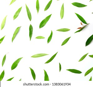 Patterns with leaves, on white background, lay flat, the top view