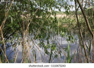 Patterns of nature. Interlacing of willow branches and dry reeds in front of the lake surface.