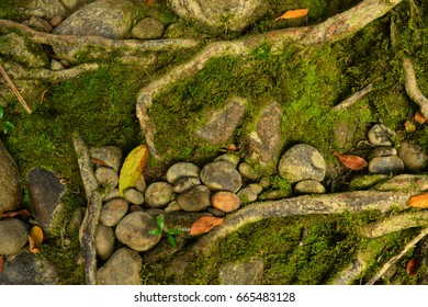 Patterns in nature: Tree roots, stones, and moss