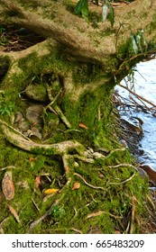 Patterns in nature: Tree roots, stones, water and moss