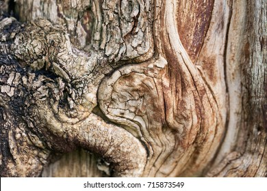 Patterns of old trees