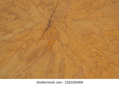 Patterns on the cross section of hornbeam wood