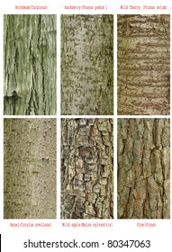 patterns set of  wild forest trees trunk with international latin names