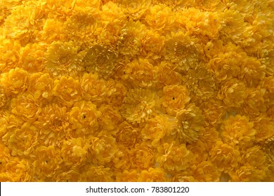 pattren texture of yellow flowers background