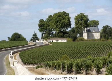 Pauillac wine region France - August 2016 - Vines and vineyards in Pauillac a wine producing area of the Bordeaux region France
