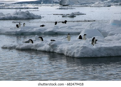 Paulet Island Antarctica, view from beach of adelie penguins on ice floe
