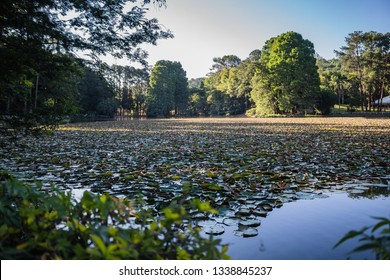 """São Paulo, SP, Brazil - December 15, 2018: Horto Florestal or officially named """"Alberto Loefgren State Park"""" was created in 1896, at the foot of the Serra da Cantareira, with free admission."""