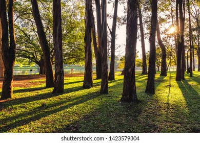 São Paulo/SP/Brazil - May 31th 2019: Ibirapuera Urban Park with Beautiful Morning Light. The Park is a listed Historical Patrimony of the City of São Paulo and its located in Moema Neighborhood