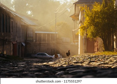 paved narrow street, morning sun and summer weather