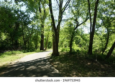 A Paved Path in the Woods
