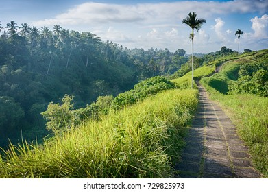 Paved pathway on the ridge of Campuhan hill in Ubud, Bali, Indonesia. Good for trekking and hiking.