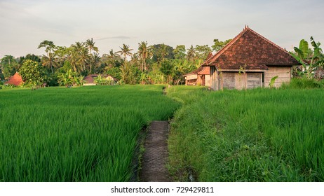 Paved pathway to the rural house standing on the rice field in Penestanan place near Ubud, Bali, Indonesia