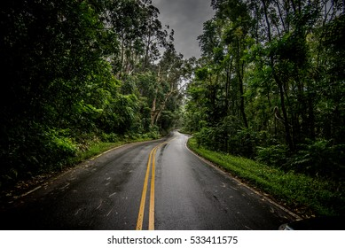 Paved road in the jungel black and white wet road to hana