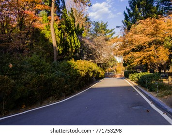 Paved road in a peaceful park like setting of lush foliage bathed in the afternoon sun