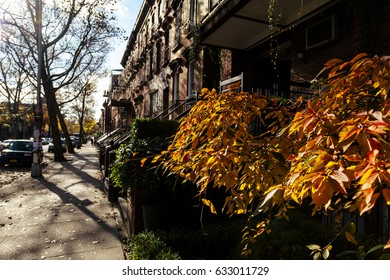 A pavement in Brooklyn, New-York on an autumn day