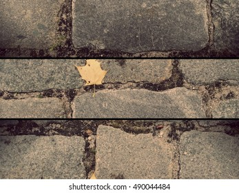 Pavement stones texture with maple leaf