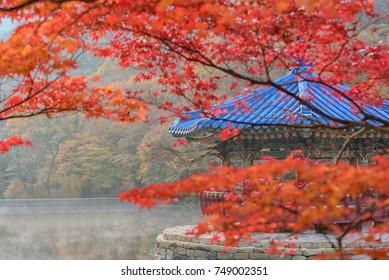 pavilion at naejangsan national park South Korea Autumn.