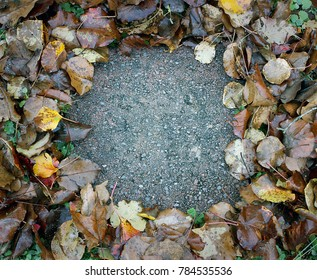 Paving stone surrounded by fall leaves
