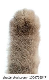 paw cat сloseup , arolium on camera, show-of-hands concept, vertical photo on white background, isolated