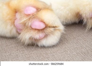 Paw cat image taken while sleeping