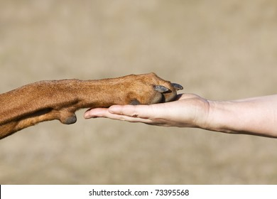 A paw of a dog and a caucasian woman hand in symbolic of friendship between human and dog