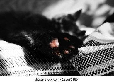 Paw with pads close-up against the backdrop of a sleeping cat on the wicker blanket. One color detail on a photo. A cat resting on the couch. The sun warms the cat and sunspots are reflected on sofa