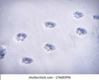 Paw prints in snow.