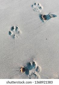 Pawn prints in sand in Henne Strand beach,Denmark