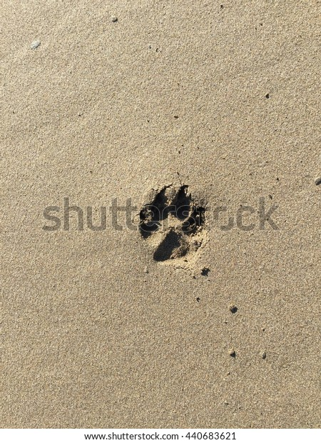 Pawprint in the sand
