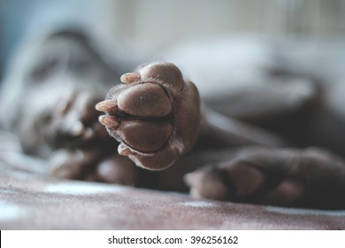 paws of a dog