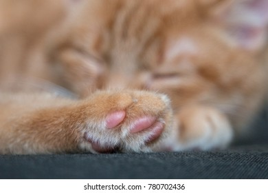 Paws of a sleeping cute ginger cat