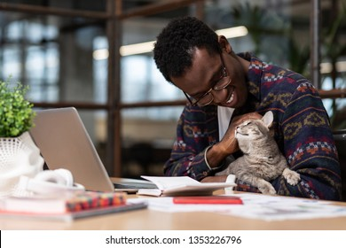 Paying attention to pets. A cat sitting in its owners hand while the owner is working