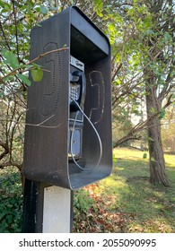 A Payphone Hidden Among Leaves