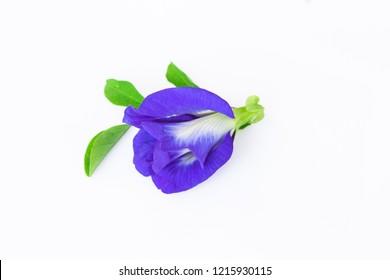 Pea flowers form nature on white background (Clitoria ternatea)